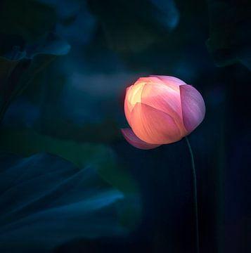 Licht geven in het donker, Catherine W. van 1x