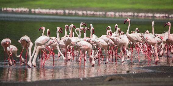 Natuur Afrika | Flamingo's - Afrika Tanzania van Servan Ott