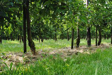 Bomenstraatjes von Miranda Zwijgers
