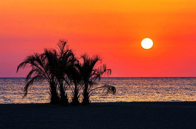 Palmbomen op het strand bij zonsondergang van Frank Herrmann