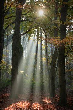 Zonneharp in een herfstbos van Susan van Etten