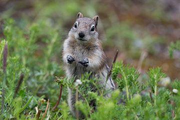 Nieuwsgierig eekhoorntje van Leon Brouwer