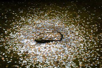 Muntjes in een vijver bij een Japanse tempel van Marcel Alsemgeest