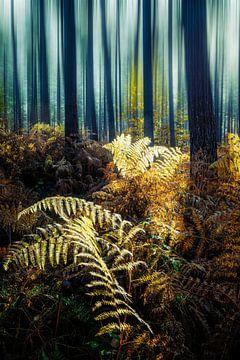 Gouden varens van Joris Pannemans - Loris Photography