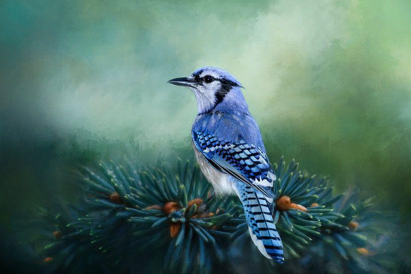 Blauwe Gaai - Vogel Op Groene Dennentak van Diana van Tankeren