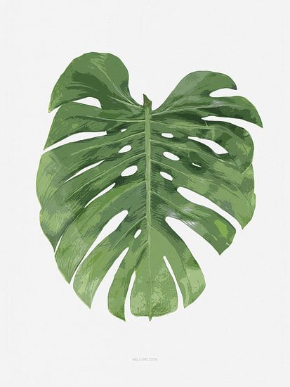 Botanical Monstera Leaf van Niels Eric Fotografie