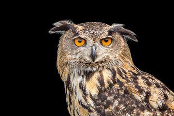 Portret van oehoe uil met zwarte achtergrond van Ben Schonewille