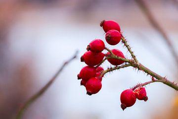 Rote Früchte von Cristina Vergara
