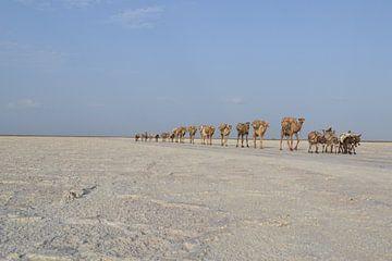 Zoutkaravaan in Danakil, Ethiopië van Harold de Groot