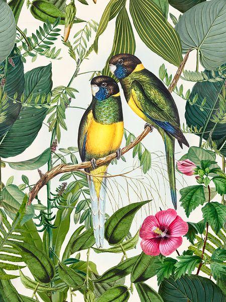 Exotic Birds In Tropical Paradise van Andrea Haase