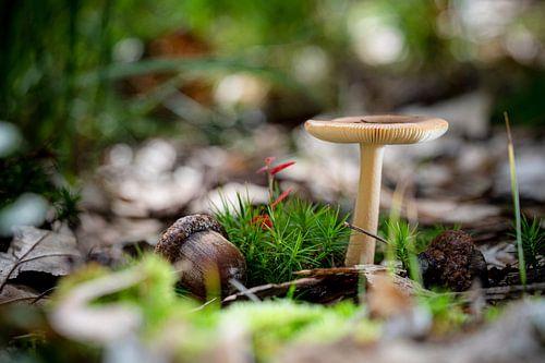 Stilleven van Paddenstoel in een herfstbos