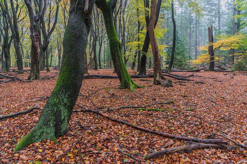 Herfst in het Speulderbos van Jeroen de Jongh