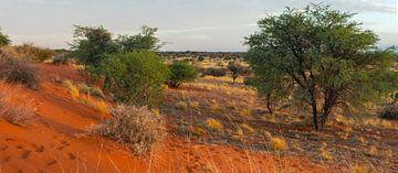 Panoramafoto van de Kalahari woestijn, Namibië van Rietje Bulthuis
