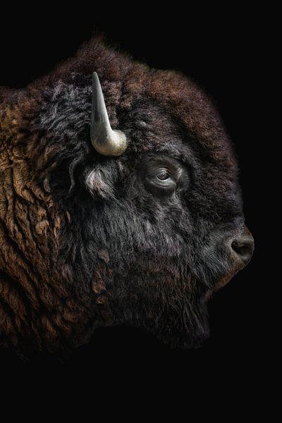 Stoere wisent buffel als portret van John van den Heuvel