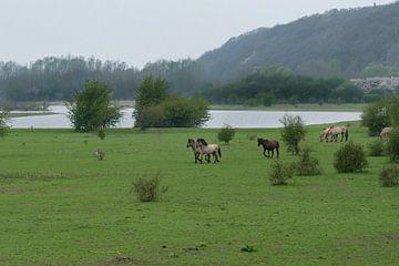 Paarden bij de Blaauwe Kamer 02 van Cilia Brandts