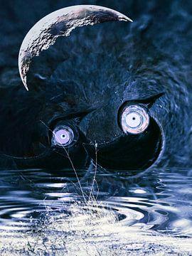 zwarte vogels van