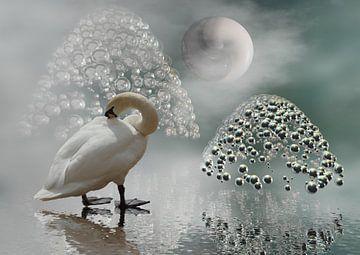 YinYang-Mond van Isa Bild