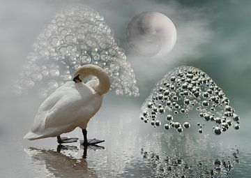 YinYang-Mond van