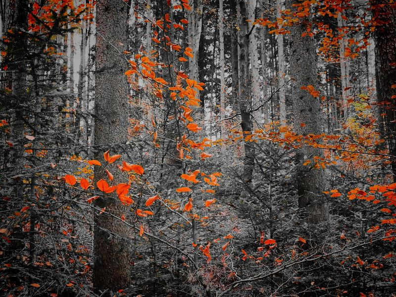 Herbstfahren II von Ilona Picha-Höberth