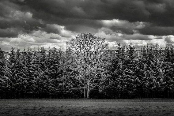 Mother tree van Brian Decrop