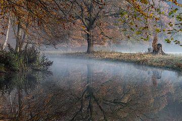 Boslandschap op landgoed Elswout (NL) van Paul van der Zwan