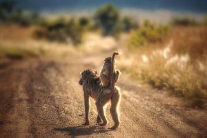 Baviaan met jong op de weg