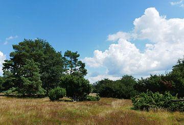 jeneverbessen en vliegdennen op de Klencke van Wim vd Neut