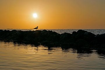 Silhouet van een meeuw bij zonsondergang op het Grevelingenemer van Judith Cool