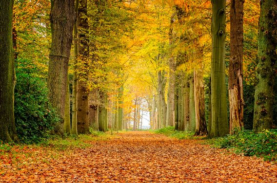 Herfst kleuren van Richard Guijt