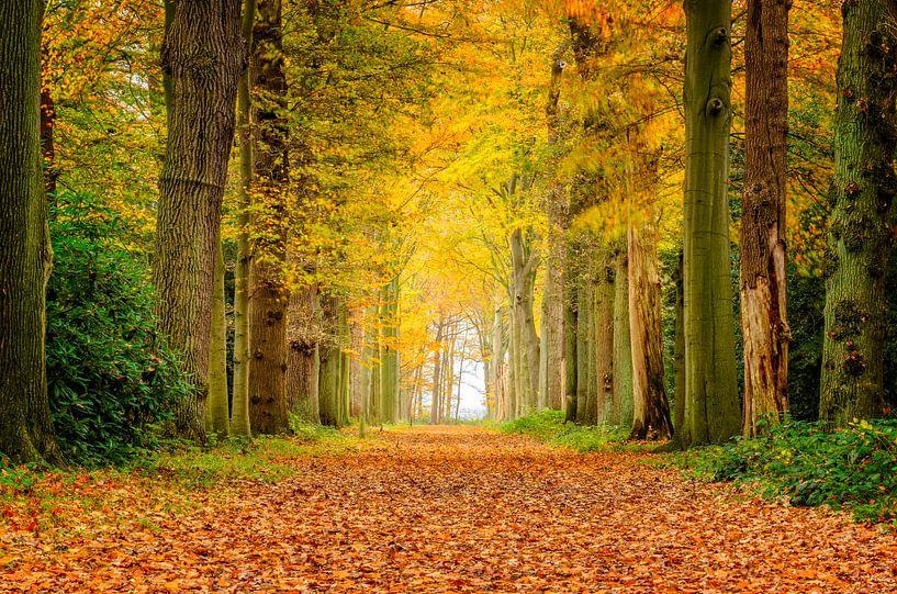 Herfst kleuren van Richard Guijt Photography