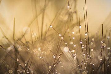 Lovely Dew van Martzen Fotografie