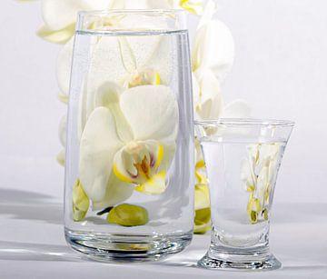 White orchid in a glass of water van Nancy Bogaert