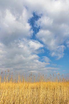 Een rietveld in Oostvaardersplassen van Annika Westgeest Photography