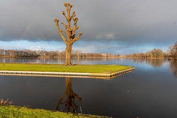 Prachtige boom bij het weegje in Waddinxveen Zuid-Holland van Merijn Loch
