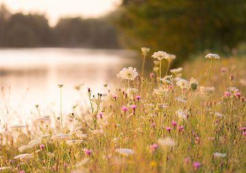 wilde bloemen langs het meer van Tania Perneel