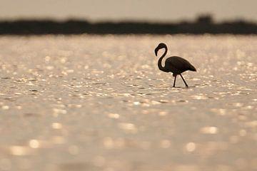 Flamingo von Johannes Klapwijk