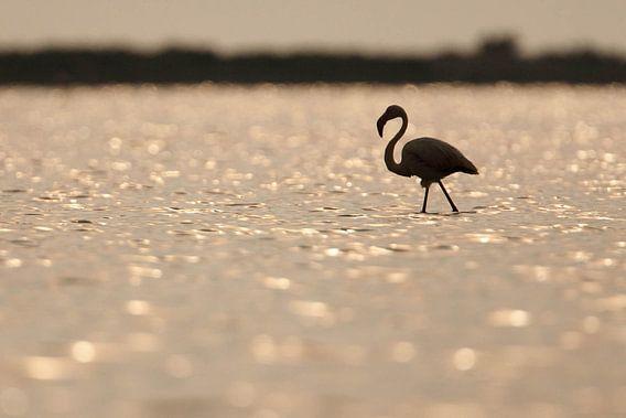 Flamingo van Johannes Klapwijk