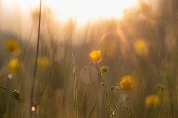 Goldene Butterblumen von Tania Perneel
