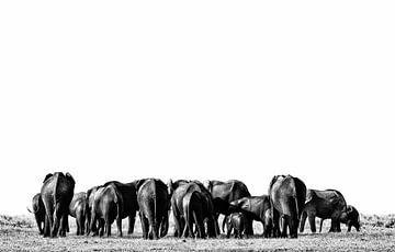 Eléphants dans le parc d'Etosha Namibie, Afrique sur Tjeerd Kruse