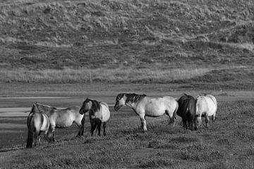 Konikpaarden sur Hans van Otterloo