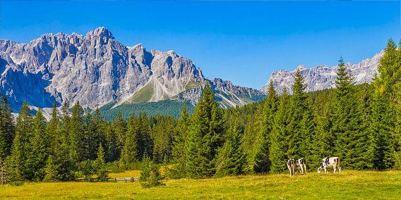 Koeien in de Dolomieten in Italië - 3 van Tux Photography