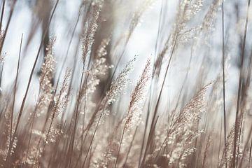Design by nature (6731) van Tot Kijk fotografie: natuur aan de muur