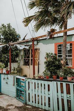 Kleurrijk huis vol planten in Willemstad | Curaçao, Caribisch gebied van Trix Leeflang