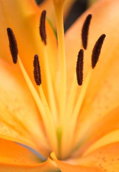 Orange flower van Royce Photography