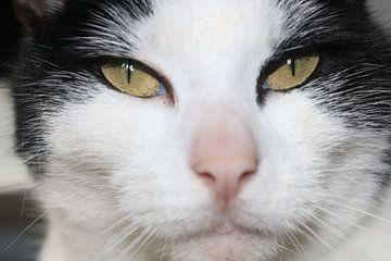 Nahaufnahme einer schwarz-weißen Katze von Rosalie Broerze