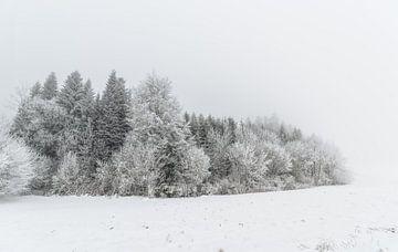Winterbäume, umgeben von Schnee von Gea Gaetani d'Aragona