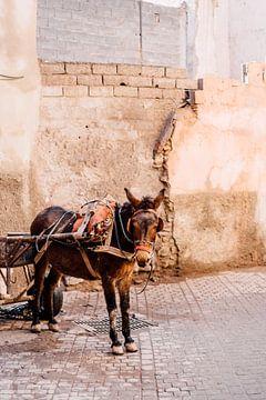 Marokkaanse Ezel in Marrakesh | Reisfotografie van Yaira Bernabela