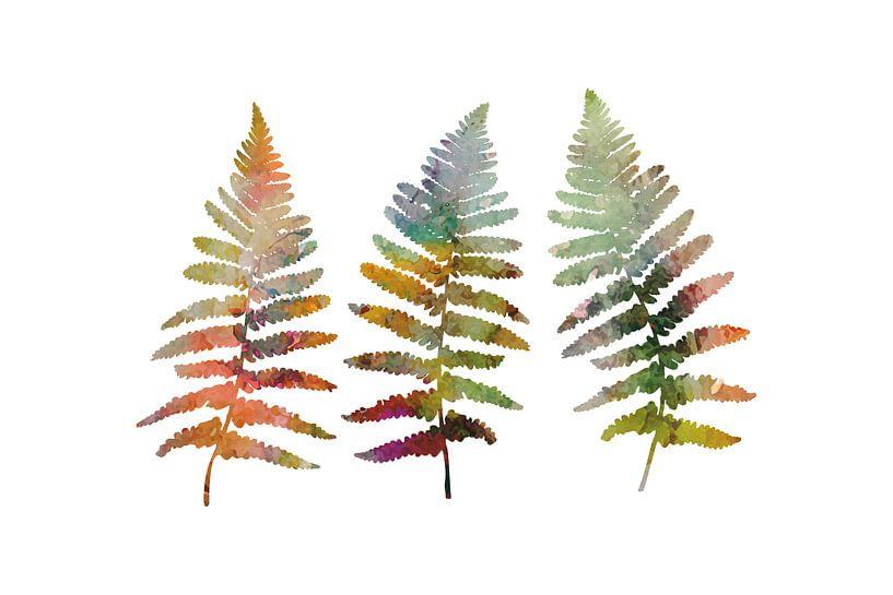 Drie Varens : botanische illustratie. van Dina Dankers