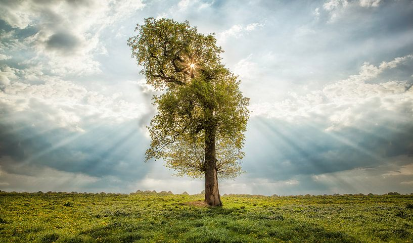 The lonely tree  van Ben van Sambeek
