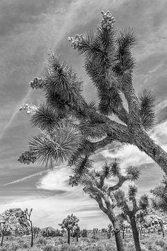 Joshua Tree National Park | monochromatique sur Melanie Viola